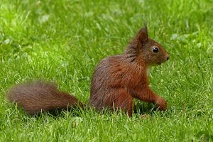 SQUIRREL (13)