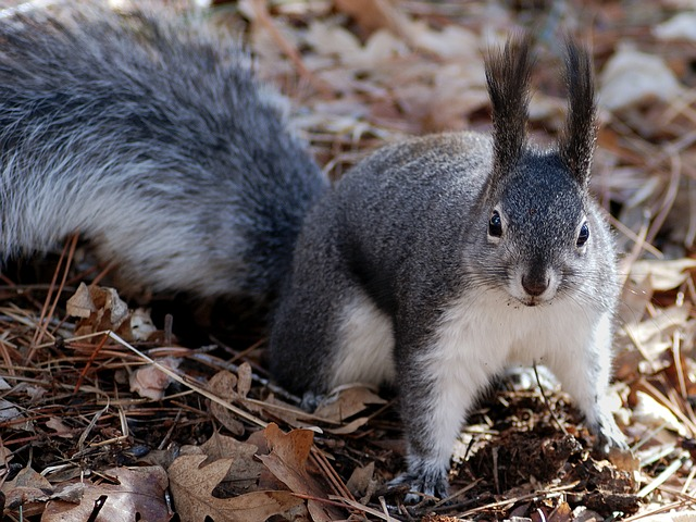 SQUIRREL (7)