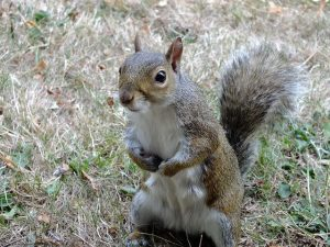 SQUIRREL (15)