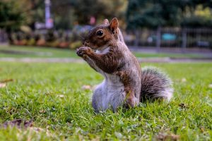 SQUIRREL (20)